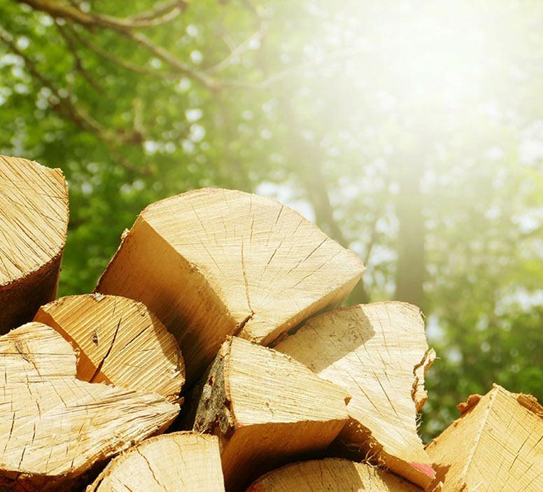 ścięte i porąbane drzewa