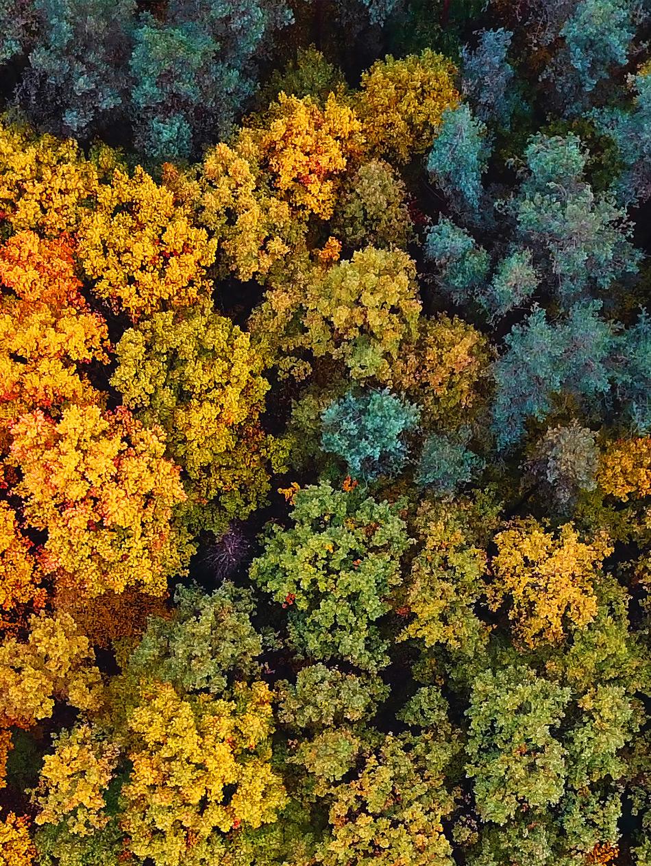 las jesienią i kolorowe drzewa
