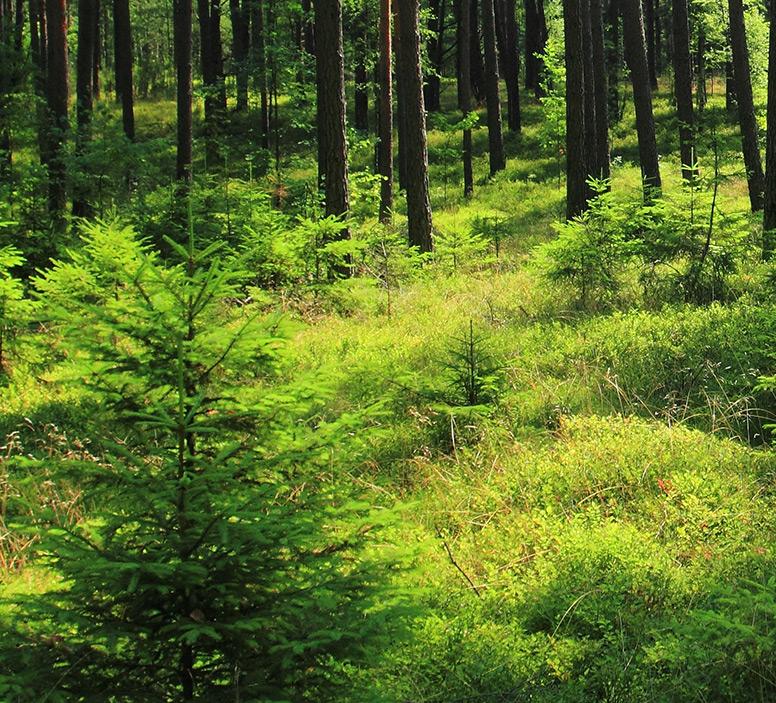 las i łąka